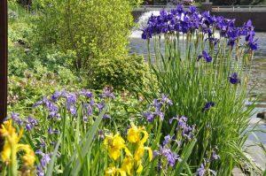 irisgarten-kujawski-park-der-gaerten