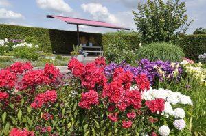 phloxgarten-kujawski-park-der-gaerten